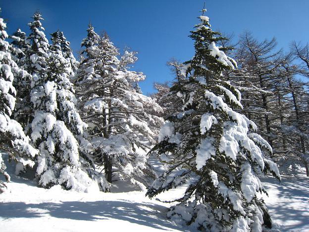 雪のせ.JPG