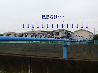 20090204 002.jpg
