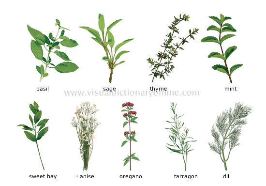 herbs_1.jpg