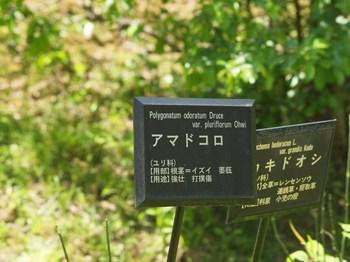 P5067840_R.JPG