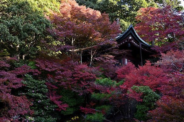 京都紅葉1.jpg