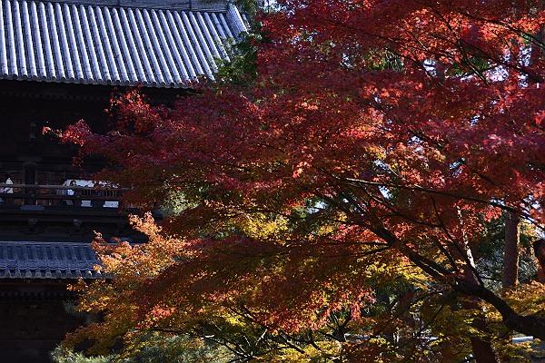 京都紅葉3.jpg