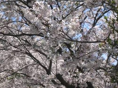 ブログ用貼り付け 英米との永続的な友好は昭和天皇の遺訓である_image013.jpg