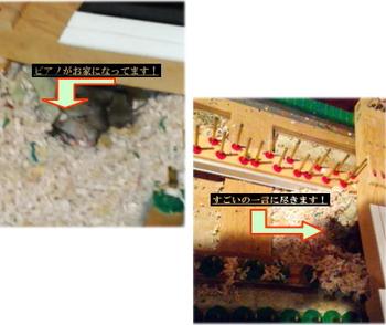 ネズミ退治.jpg