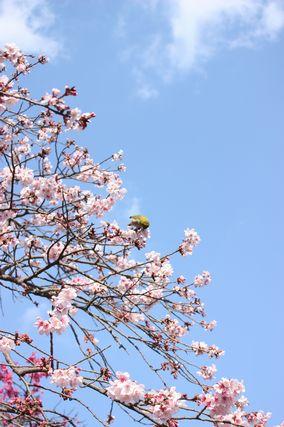 kagoshima2.jpg
