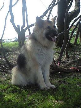 Queen SatoriCA3A0483002.jpg
