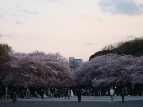 上野公園の桜(1).jpg
