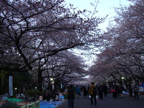 上野公園の桜(5).jpg