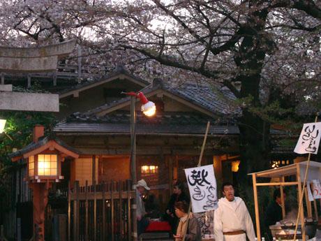 上野公園の桜(8).jpg