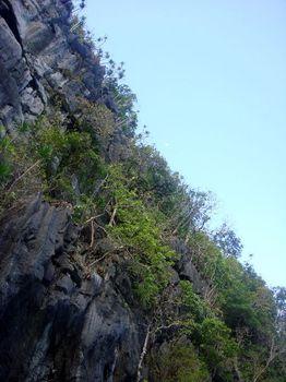 岩に生い茂る植物.JPG