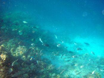 Snorkelling at Shimizu Beach 7.JPG