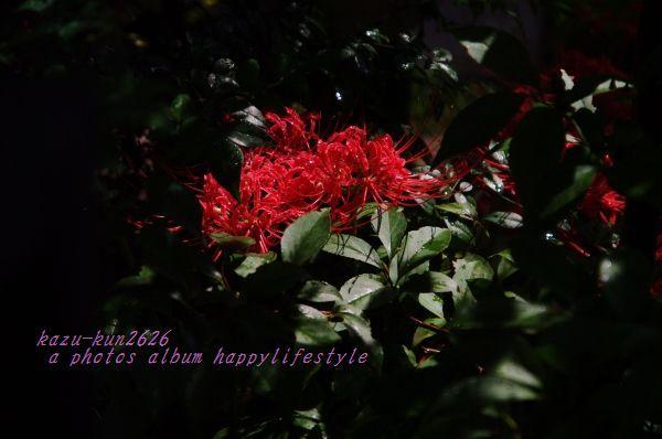 IMGP8291.jpg