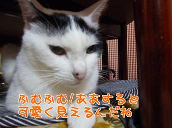 P1170364編集②.jpg