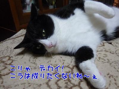 P1210110編集②.jpg