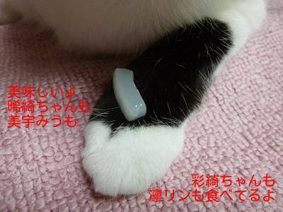 P1260930編集②.jpg
