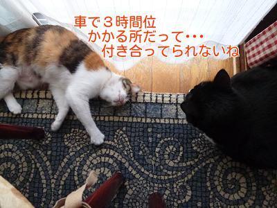 P1270515編集②.jpg