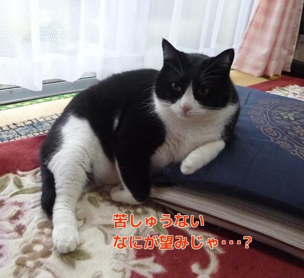 P1300349編集②.jpg