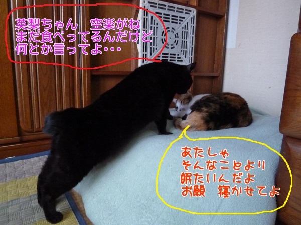 P1310952編集③.jpg