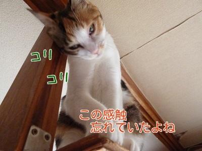 P1370254編集②.jpg