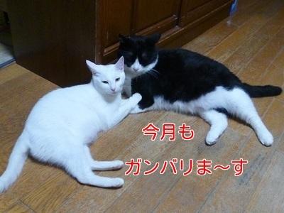 P1450345編集②.jpg