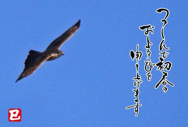 H25オオタカ-s.jpg