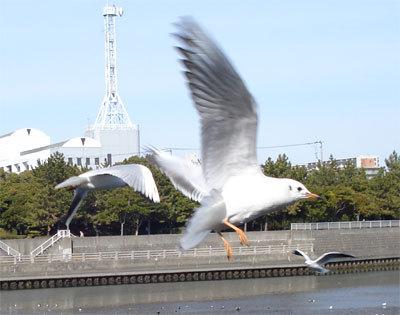 飛翔の観察.jpg
