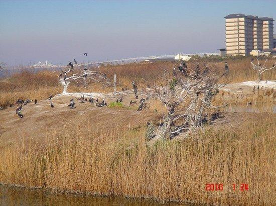 播州干潟2DSC02076.jpg