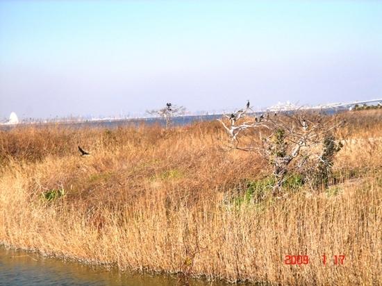 池の鳥.JPG
