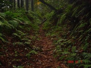 登山道DSC00941.jpg