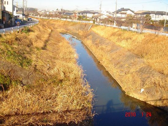 矢那川DSC01991.jpg
