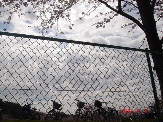 鎌足小学校の桜1DSC02891.jpg
