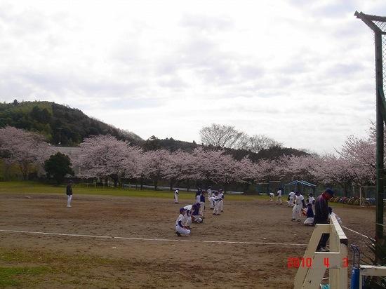 鎌足小学校の桜3DSC02892.jpg