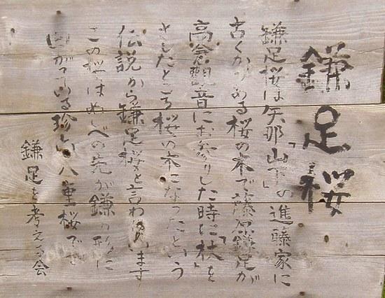 鎌足桜2.jpg