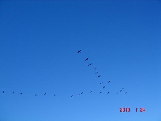 鵜の飛行DSC02066.jpg