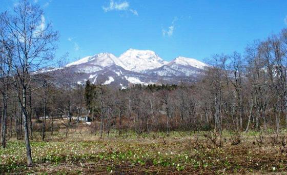 水芭蕉と 妙高山.jpg