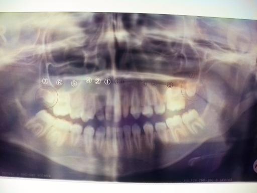 歯科01.png