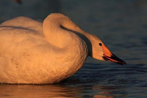 016'09白鳥① 279-3.jpg