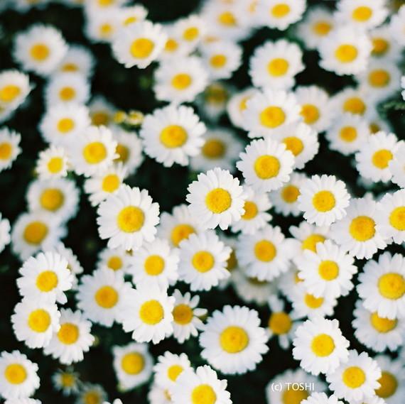 FH000009黄色&白色.jpg