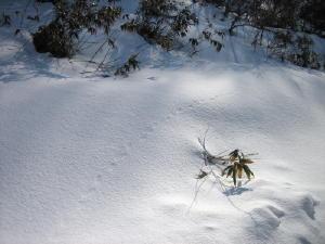 20120305雪1.jpg