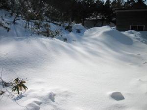 20120305雪2.jpg