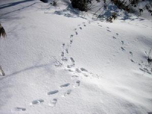 20120305雪6.jpg