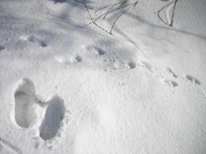 20120305雪7.jpg