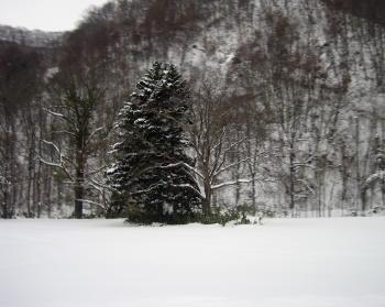 20121222冬の山3.jpg
