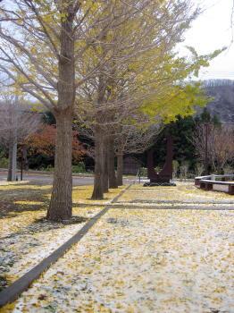 201212イチョウと雪3.jpg