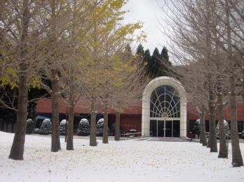 201212イチョウと雪4.jpg