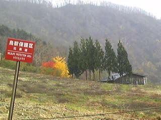 秋も終り010山小屋.jpg