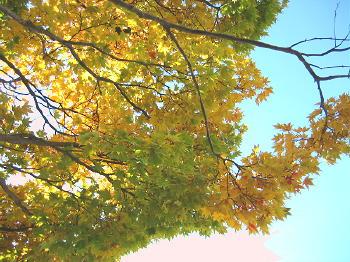 秋も終り01紅葉.jpg