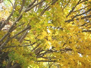 秋も終り02紅葉.jpg