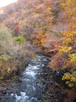 秋も終り04紅葉.jpg