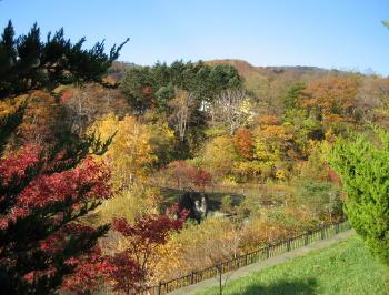 秋も終り05紅葉風景.jpg